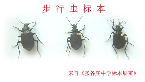 昆虫标本制作方法