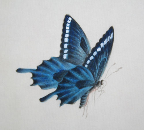 )--蝴蝶的画法