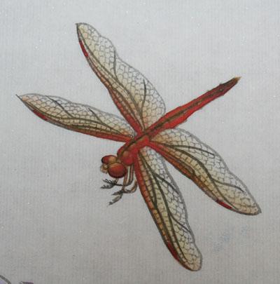 工笔花鸟画教程(八)--蜻蜓的画法