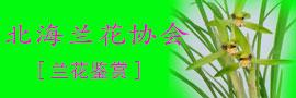 北海兰花协会  北海兰花苑 中国水墨艺术研究院北海交流中心