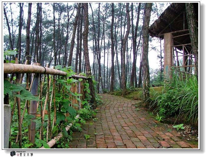 富顺青山岭森林公园