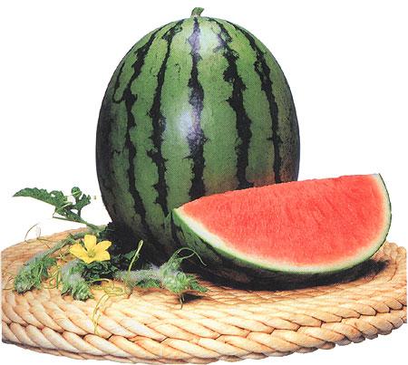 西瓜新品种介绍