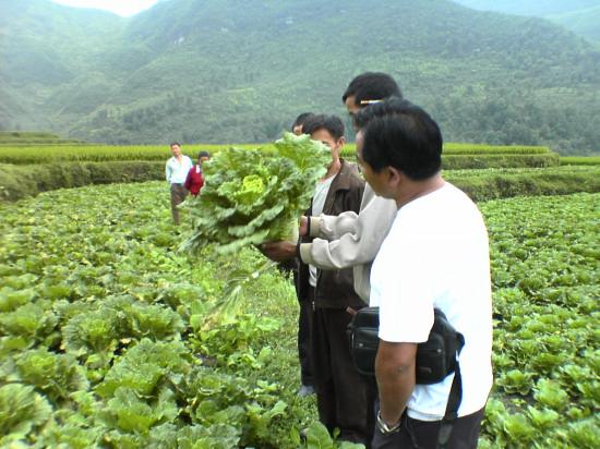 贵定县都六乡积极改变群众原始种植观念,合理抓好全乡产业结构调整工作,采取六措施促进蔬菜产业的发展。 该乡统一思想,加强领导在实施蔬菜产业工作中,围绕如何引导农民加大结构调整力度,增加农民收入开展了解放思想大讨论,提出了开展一村多菜的种植模式,打响都六乡贾戎反季节品牌思路,成立农业产业调整领导小组,进一步加强领导。 制定科学发展规划是稳步推进蔬菜发展的前提,都六乡充分利用州党建扶贫队挂点机遇,抓住国家惠家政策,合理的利用土地流转,采取干部职工引办的工作模式,承包50多亩土地为示范点辐射带动群众。并制定