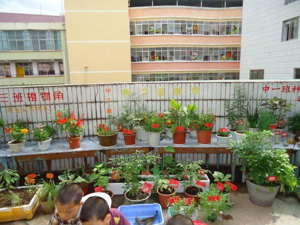 美工区,数学区,益智区,和照相馆,植物种养观察角.图片