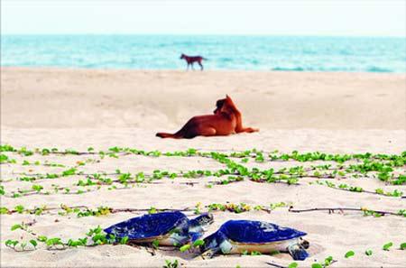 惠州海龟湾在大亚湾和红海湾的交界处