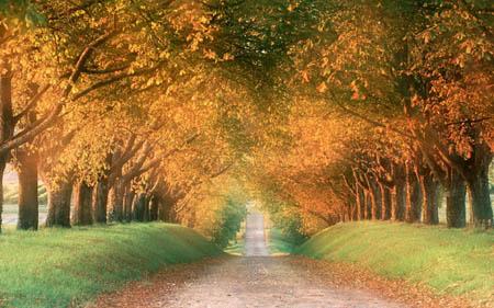 描写秋天的古诗词摘选