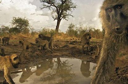 环境污染和乱捕滥猎已导致野生动物急剧减少