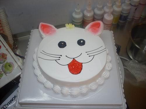 15可爱的小猫咪