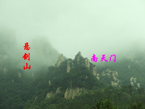 茶园风景--金寨县四季春茶叶